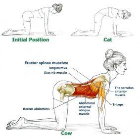 Obat Sakit Pinggang – Cat Cow Yoga Pose